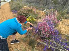 7 Day South West Wildflower Tour 2020