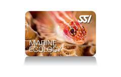 Snorkeling Ecology Program