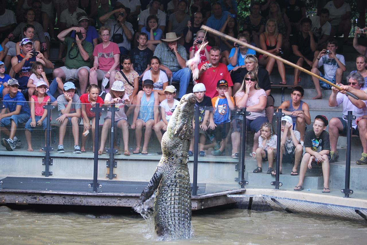 Port Douglas to Hartley's Crocodiles