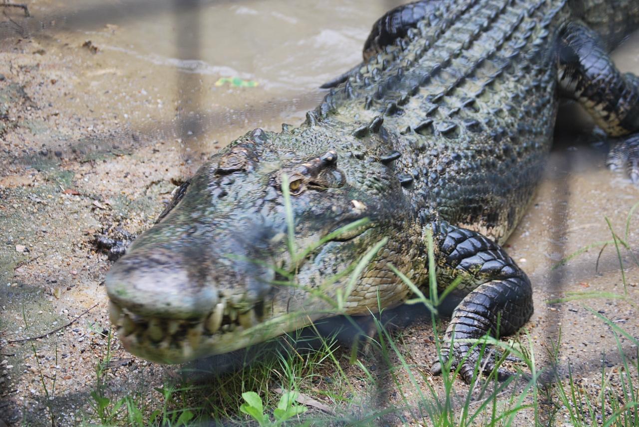Port Douglas to Hartley's Crocodile Adventures
