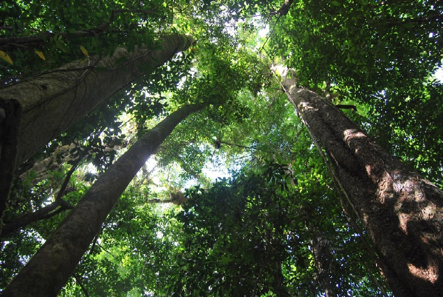 Port Douglas to Daintree Rainforest Day Tour and Mossman Gorge Package