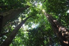 Port Douglas to Daintree Tropical Rainforest.  Full Day Guided Tour