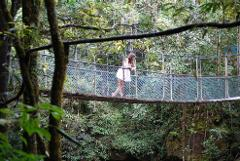 Port Douglas to Mossman Gorge. Return transfer special when also booking our Daintree Rainforest Full Day Tour.