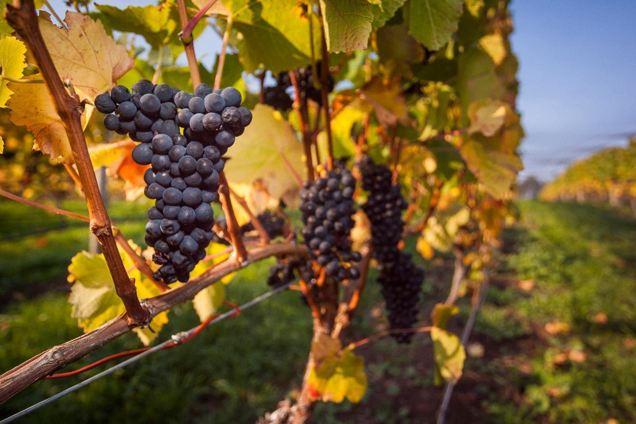 Prestige Tours - Half Day Tamar Valley Wine Tour