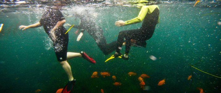 Snorkel Rentals with Wetsuit