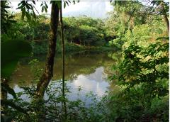 Natura Premium Guiado