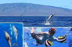Maui Kaulana Lanai Snorkel and Dolphin Watch