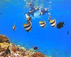 Maui Tropical Fish And Sea Turtle Snorkeling Tour