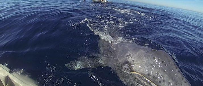 Whale Watching Kayak Tour