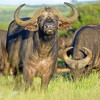 Kruger Swaziland And Lesotho  South 2018  South Africa