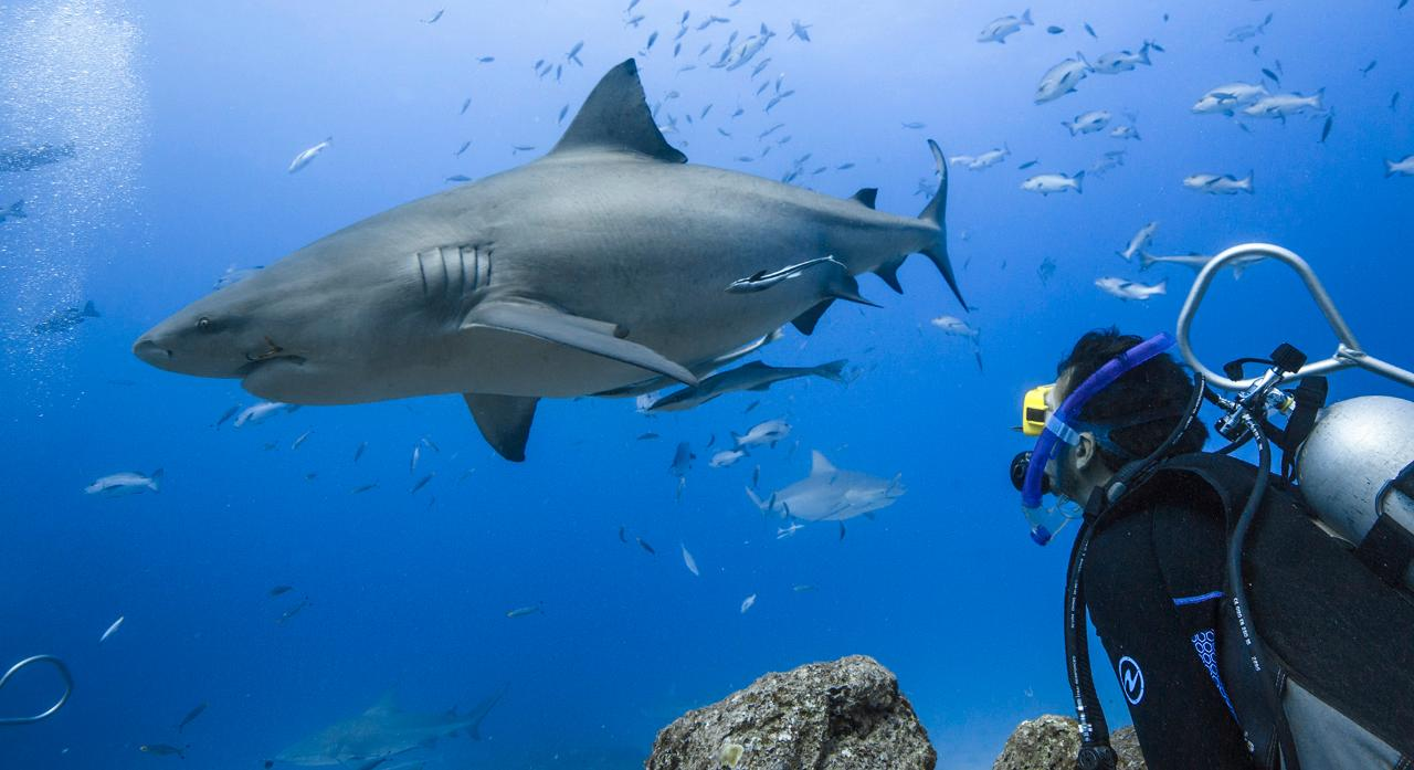 Barefoot Kuata Bull Shark Certified Dive