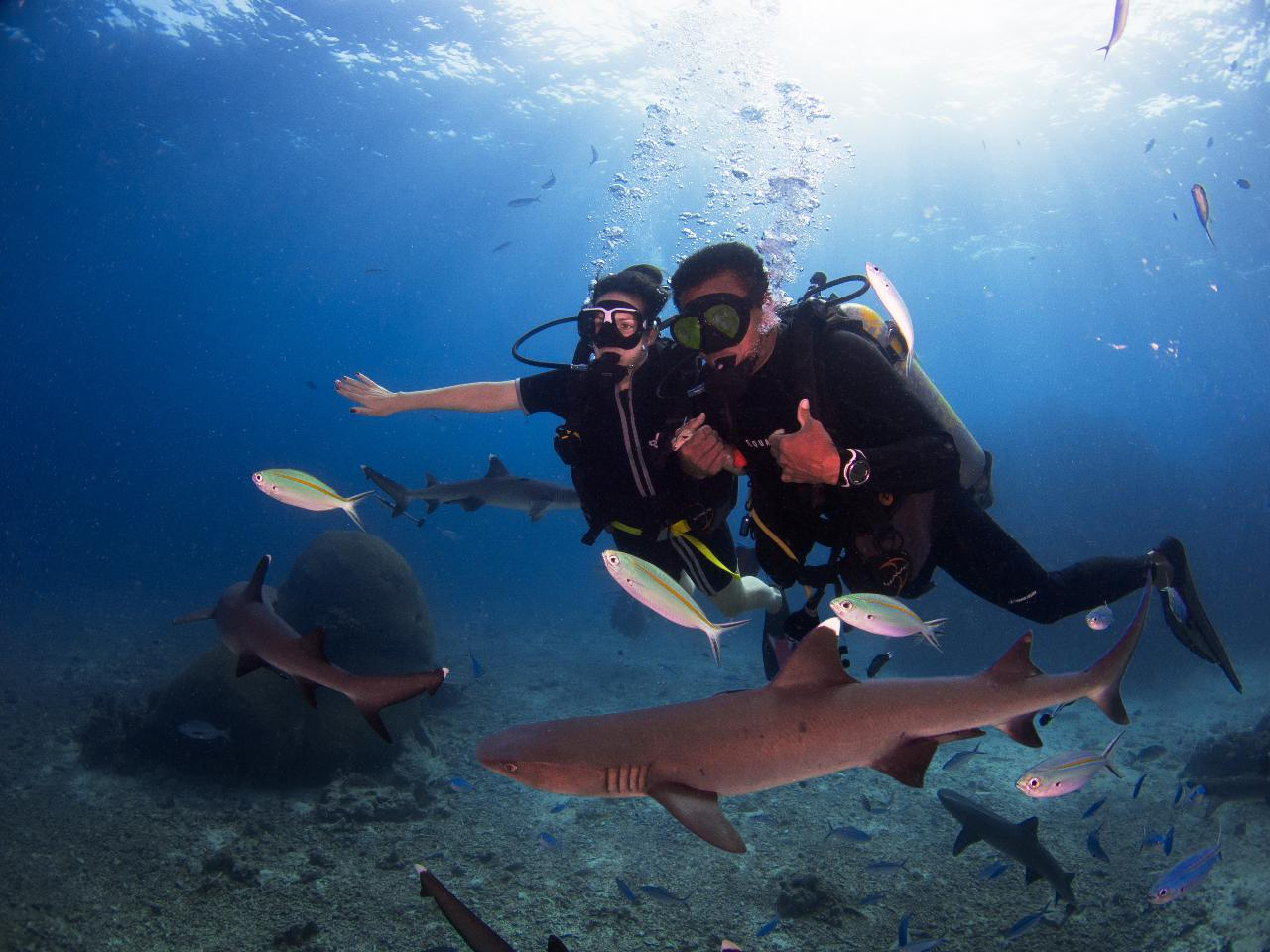 Barefoot Kuata Reef Shark Introductory Dive
