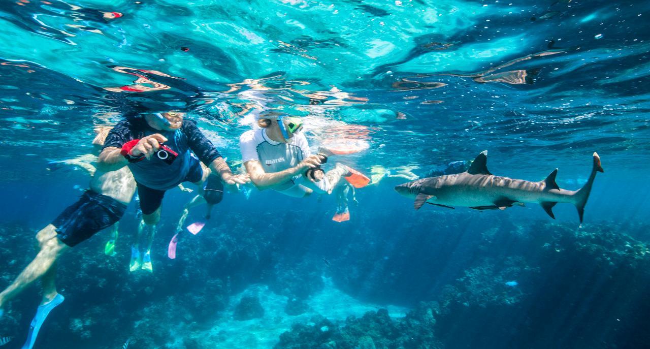 Barefoot Kuata Shark Snorkel Day Tour