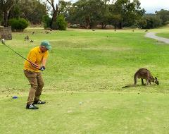 Melbourne Kangaroo Golf