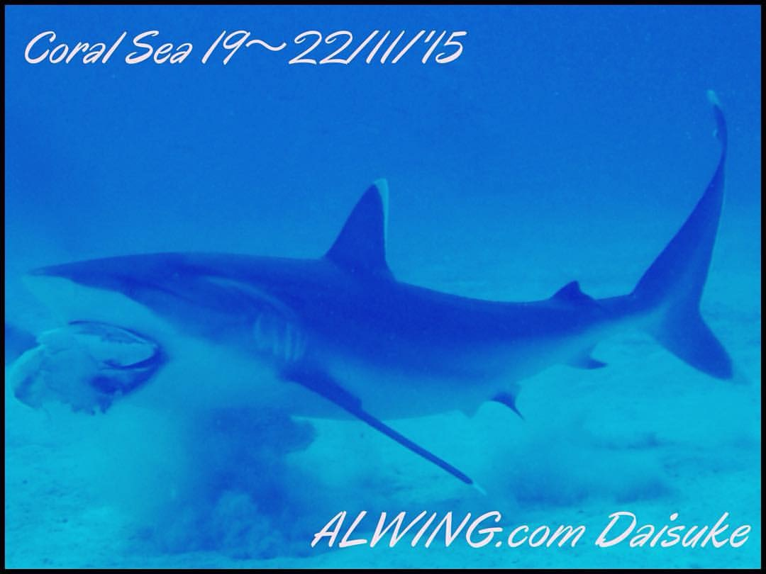 4 Day 3 Night Coral Sea Holmes Reef Shark Diving Expedition