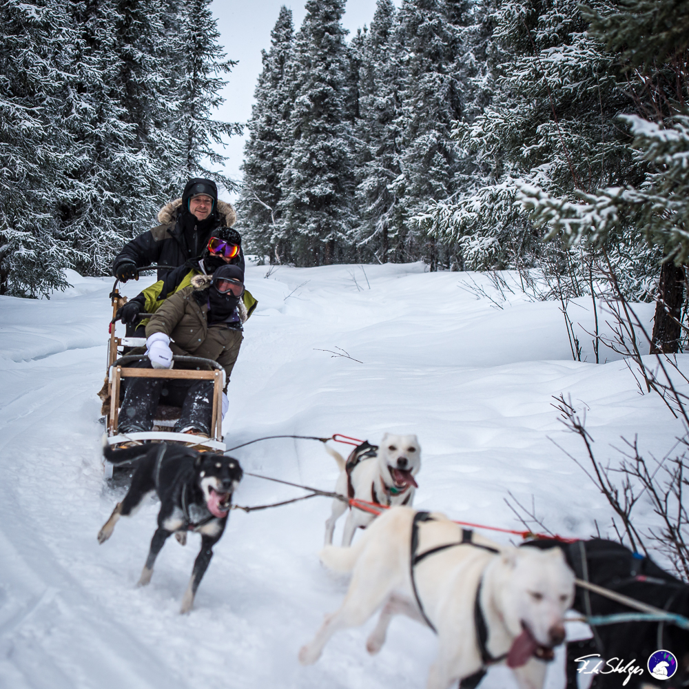 Borealis Basecamp 1 HR Dog Sledding and Kennel Tour