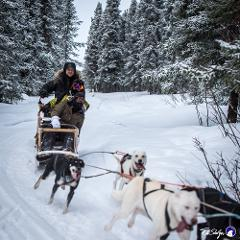 Borealis Basecamp狗拉雪橇一日游/Dog Sledding and Kennel Tour