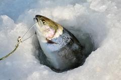 Ice Fishing and Snow Machine Package