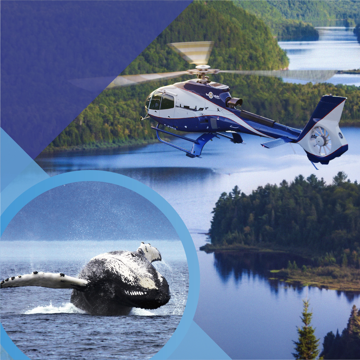 HELICOPTER WHALES WATCHING ADVENTURE GIFT CARD