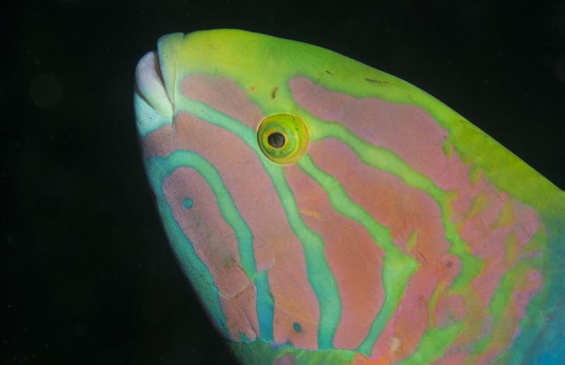 Single SUNRISE Dive: Mooloolaba Reefs