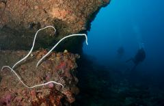 Double Dive: Mooloolaba Coral Reefs
