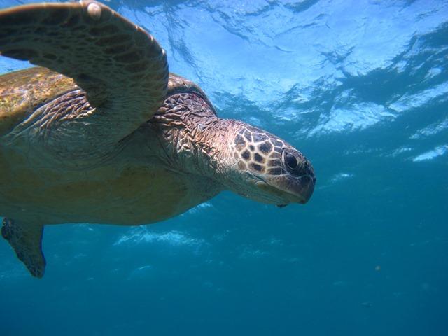 3 dive day: Flinders Reef