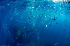 Tec Dive (ON BOARD SUB SURFACE SCUBA BOAT)