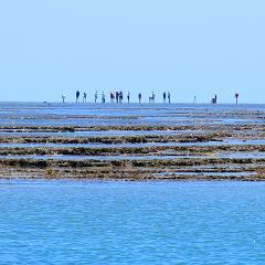 Vernon Islands Reef Walk and Snorkel