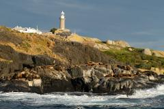 Montague Island Tour and Snorkel with the Seals