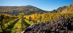 Premium Queenstown Wine Tour