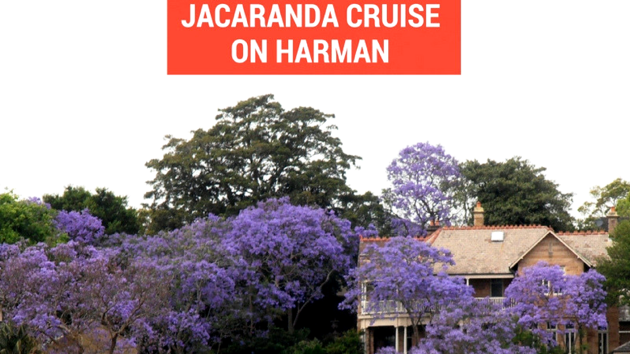 Jacaranda Cruise