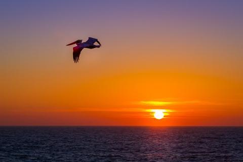 Milbi Sunset