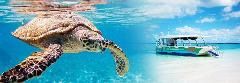 Turtle Discovery Ecotour