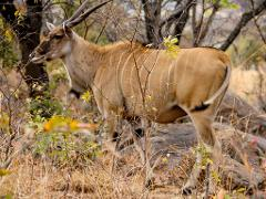 Antelope Game Park to Bulawayo
