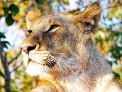 Victoria Falls → Hwange National Park