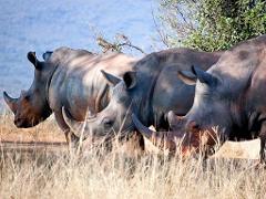 Bulawayo → Hwange National Park