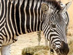 Bulawayo → Chipangali Wildlife Orphanage