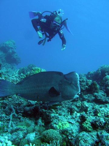 Liquid Fever Scuba Diving Day Trip