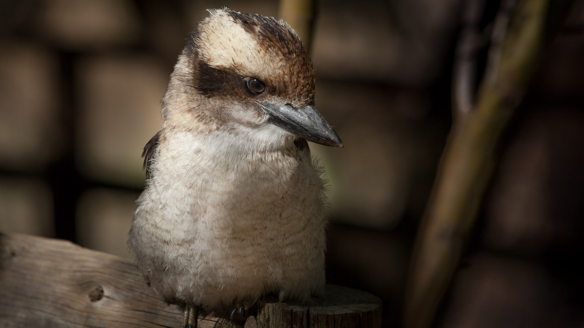 Private Wildlife Photography Tuition at Bonorong Wildlife Sanctuary