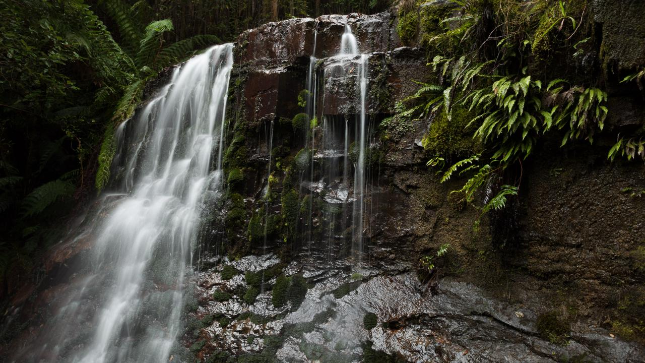 Private Photography Tuition - Wellington Wanders 'Ferns, Fungi & Waterfalls' Photography Walkabout - 3 hours