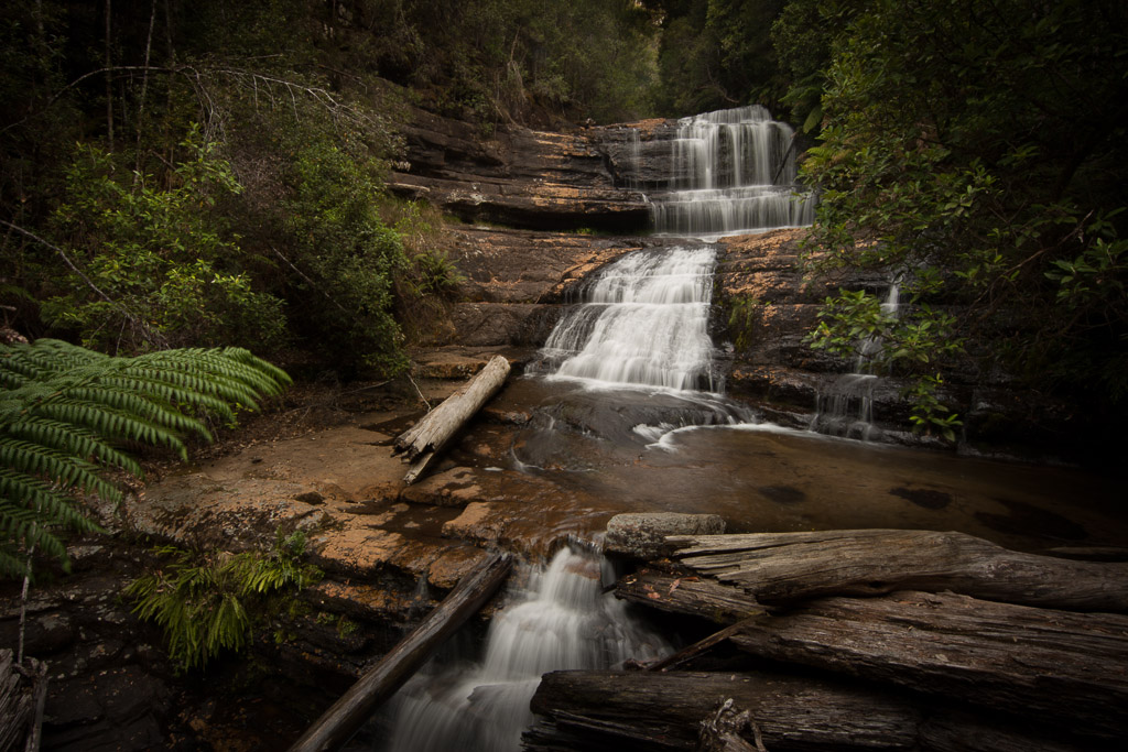 Mt Field National Park & Russell Falls - Full Day Private Tour