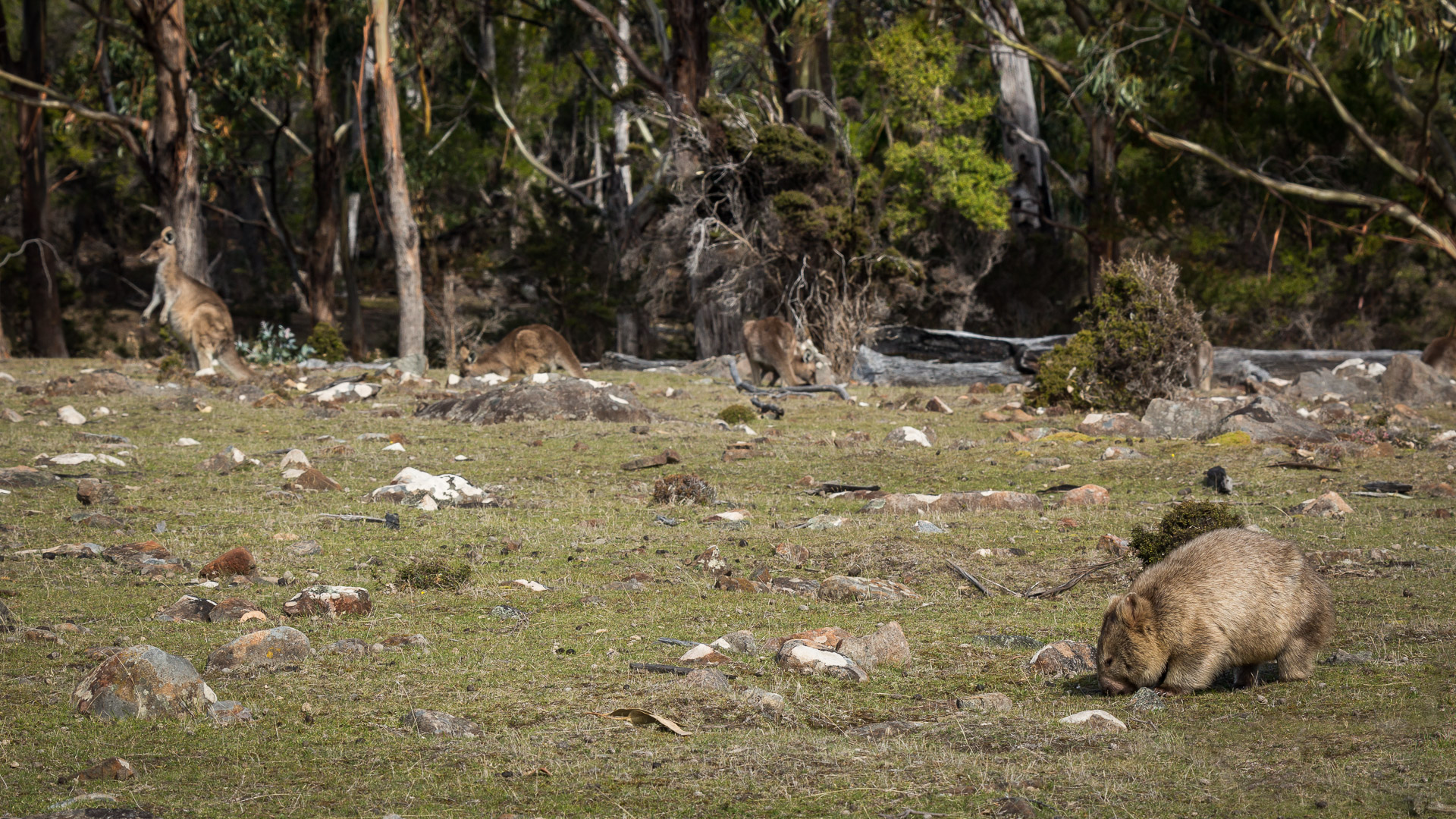 Maria Island - photo-oriented private day tour (CLASSIC)