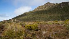 PREMIUM Hartz Mountains & Tahune Airwalk - photo-oriented private day tour  (all-inclusive)