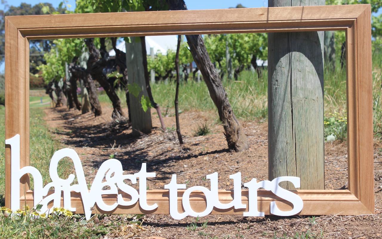 Premium Wine & Food Lovers Tour