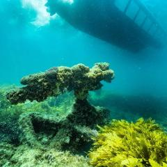 Half Day Snorkel + Coral Viewing Exmouth Approx 3.5 - 4hrs