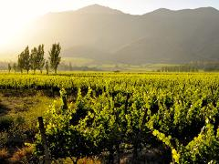 All the magic of Maipo Valley in two days and a half