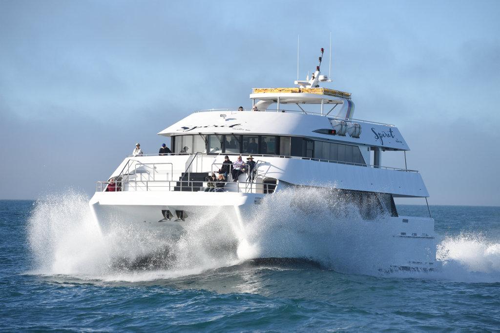 BEST VALUE 1/2 Day SPIRIT OF HERVEY BAY Whale Watch