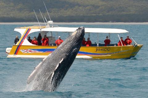 YAHOO Whale Watch Adventure