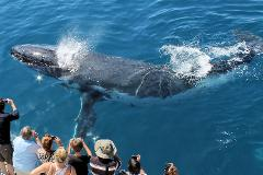 Gift Certificate - Whale Watching