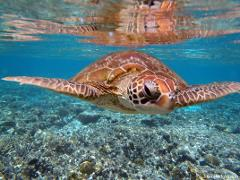 Turtle Discovery Tour